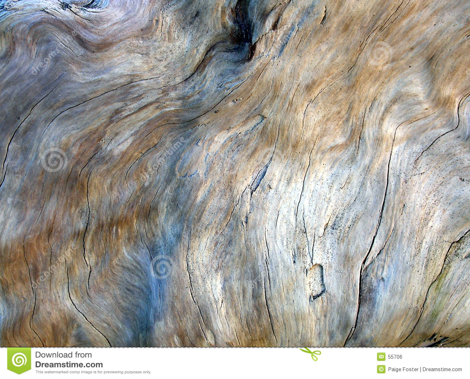 Struttura 2 del Driftwood