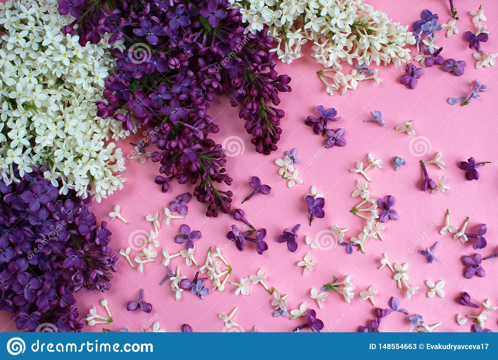 Struttura dei fiori del lillà su un fondo rosa