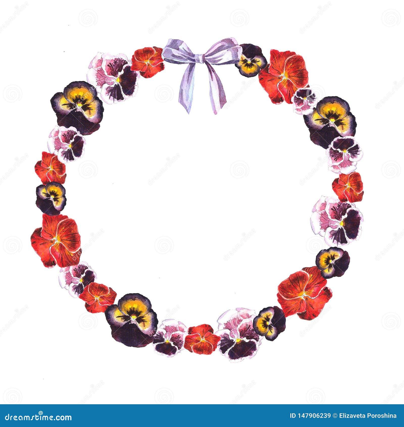 Struttura del cerchio dell acquerello delle viole rosse, porpora, rosa e dell arco porpora