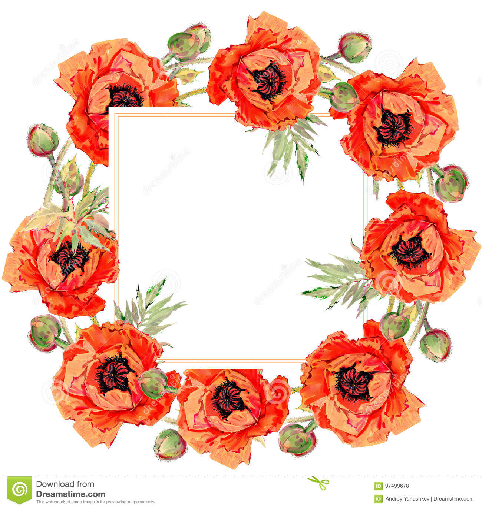 Struttura del fiore del papavero del Wildflower in uno stile dell acquerello