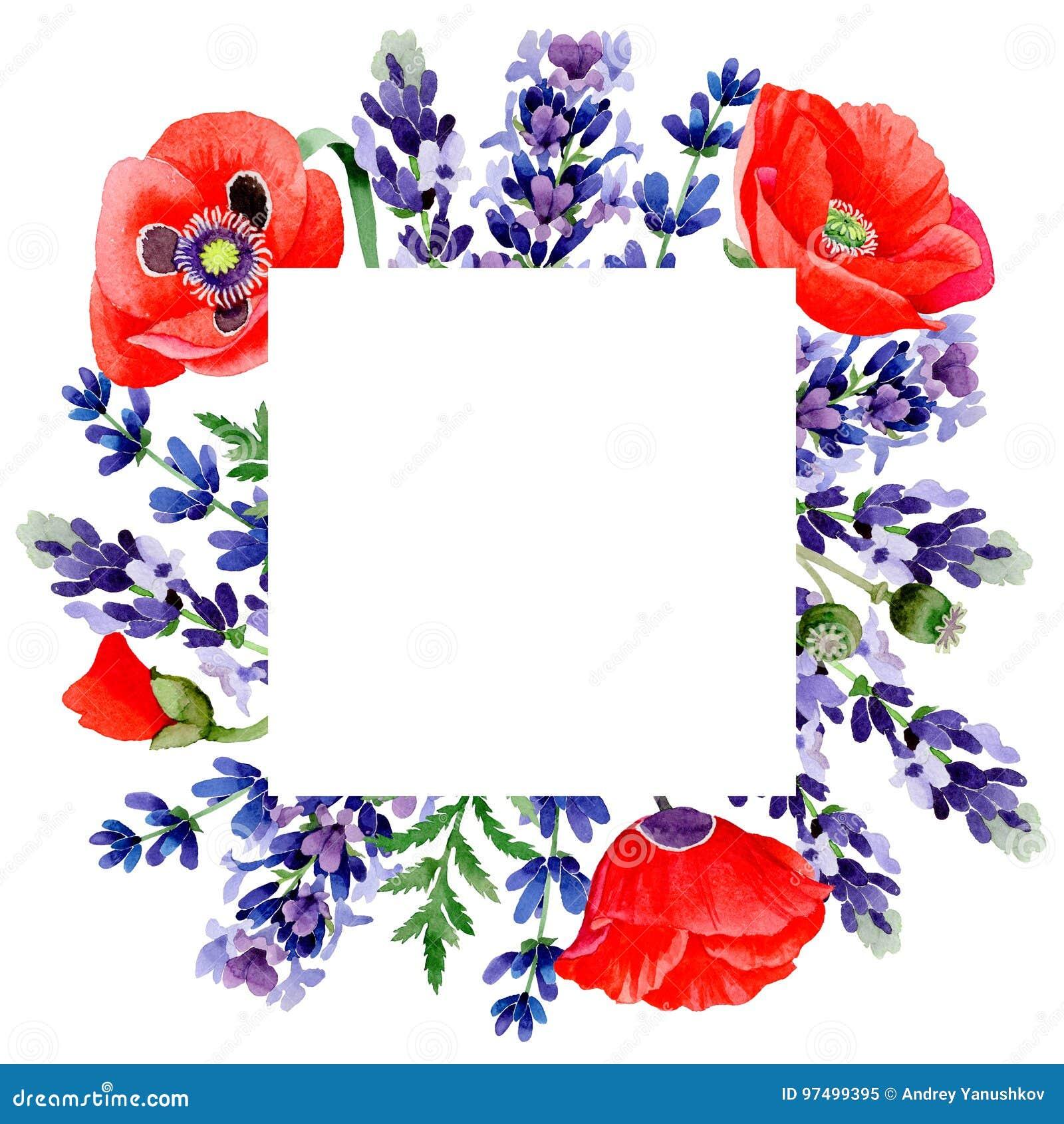 Struttura del fiore della lavanda del Wildflower in uno stile dell acquerello