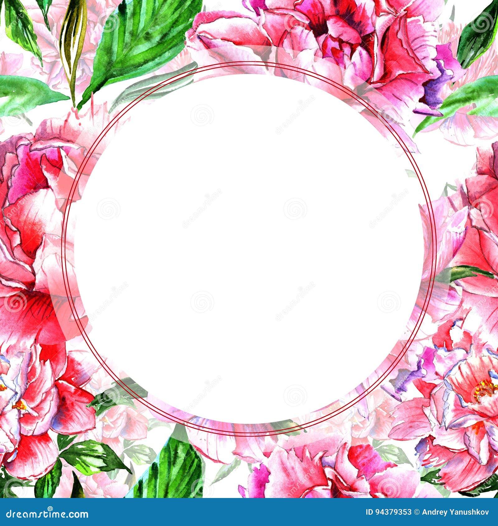 Struttura del fiore della peonia del Wildflower in uno stile dell acquerello isolata