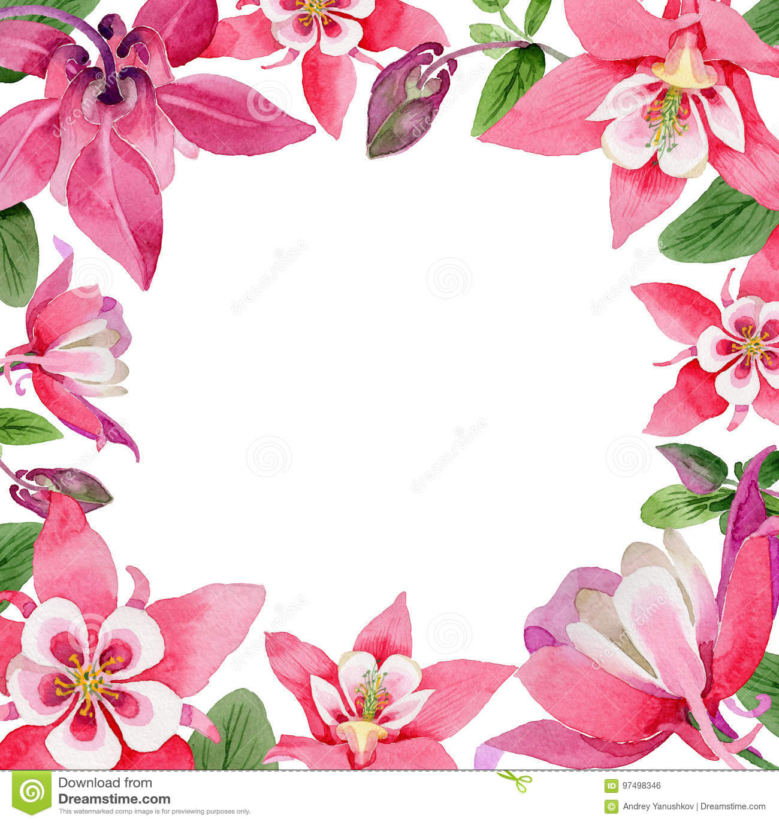 Struttura del fiore di aquilegia del Wildflower in uno stile dell acquerello