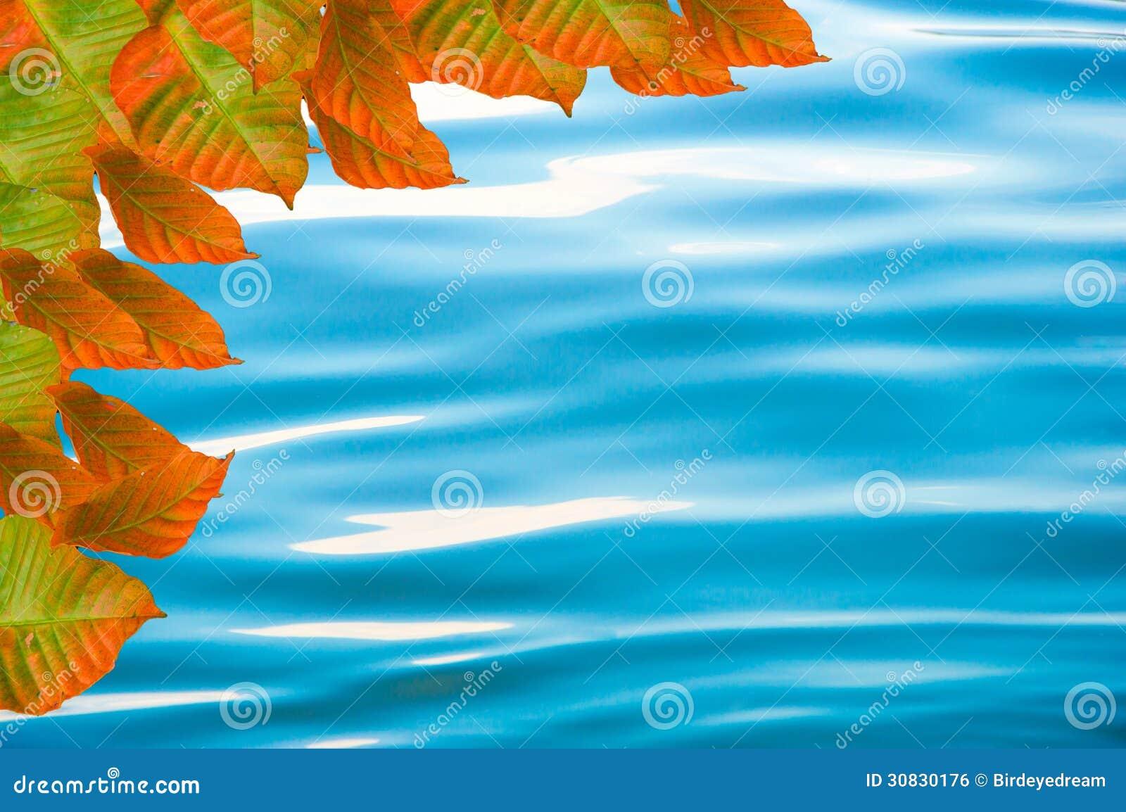 Struttura dell acqua