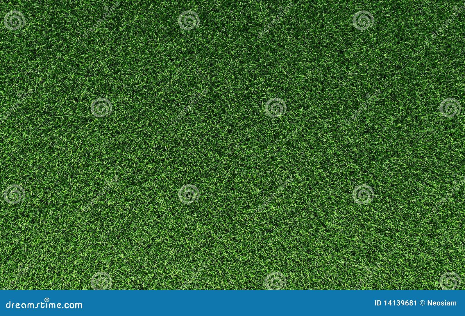 Struttura dell erba