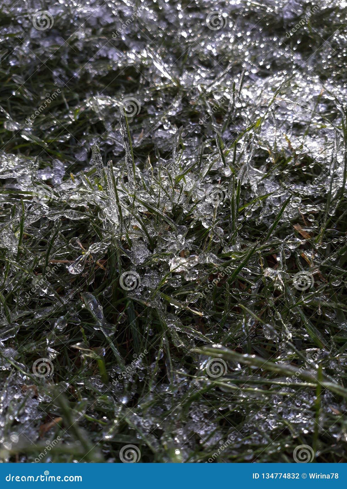 Struttura dell erba del gelo