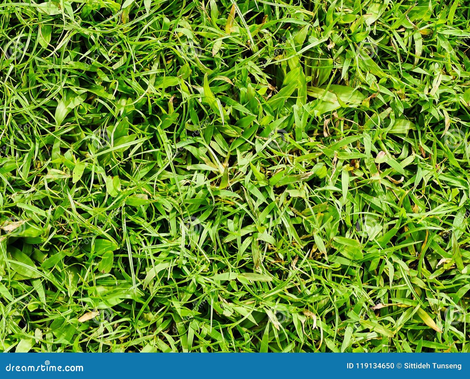 Struttura dell erba o fondo dell erba