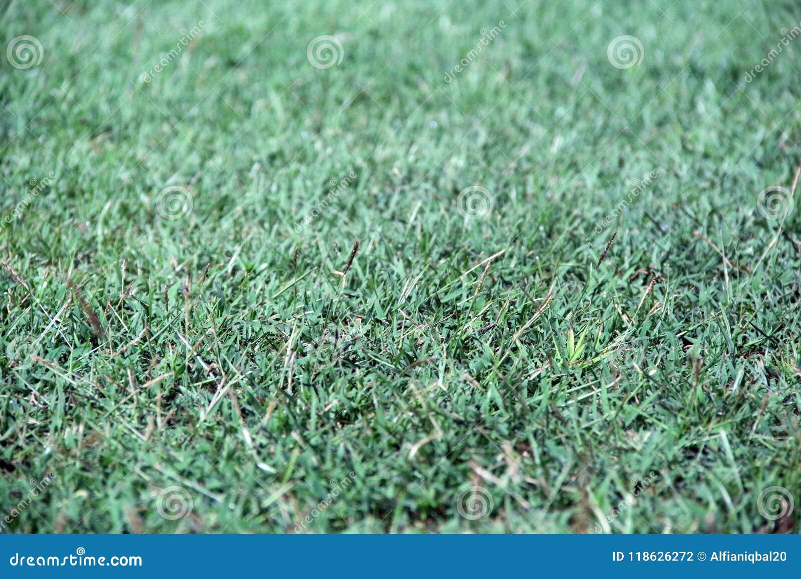 Struttura dell erba verde Erba artificiale verde sulla terra Giacimento di fienarola dei prati verde per calcio
