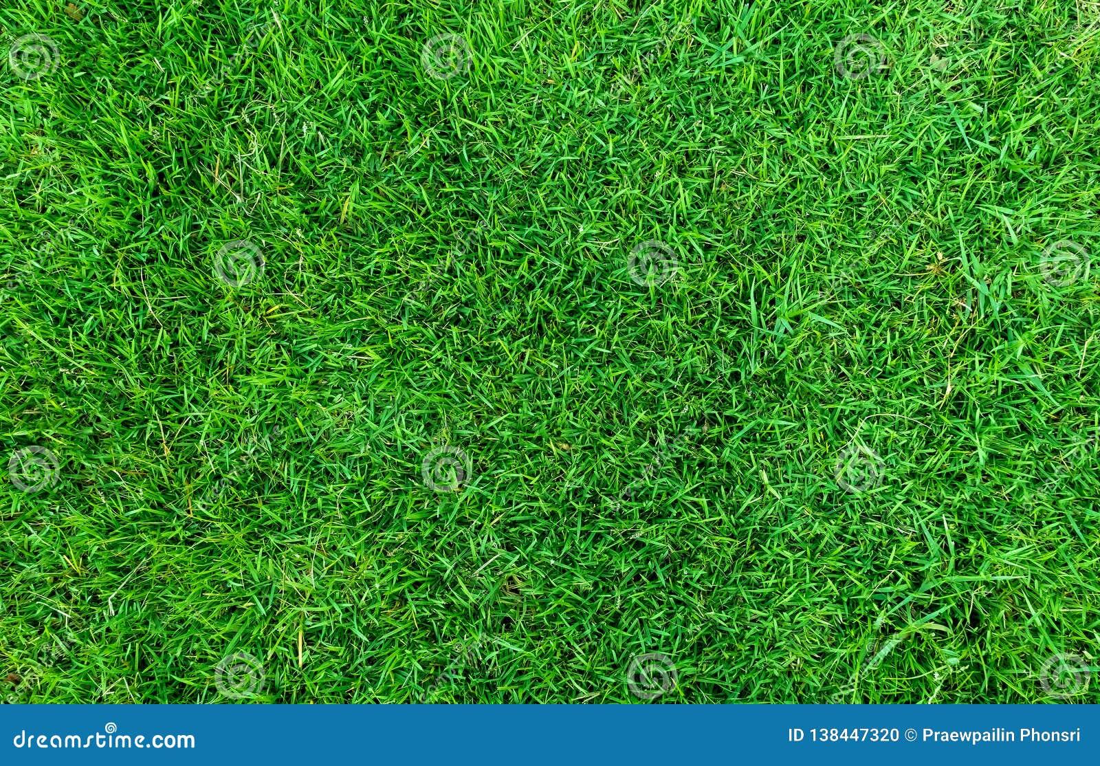 Struttura dell erba verde per priorità bassa Fondo verde del modello e di struttura del prato inglese Primo piano