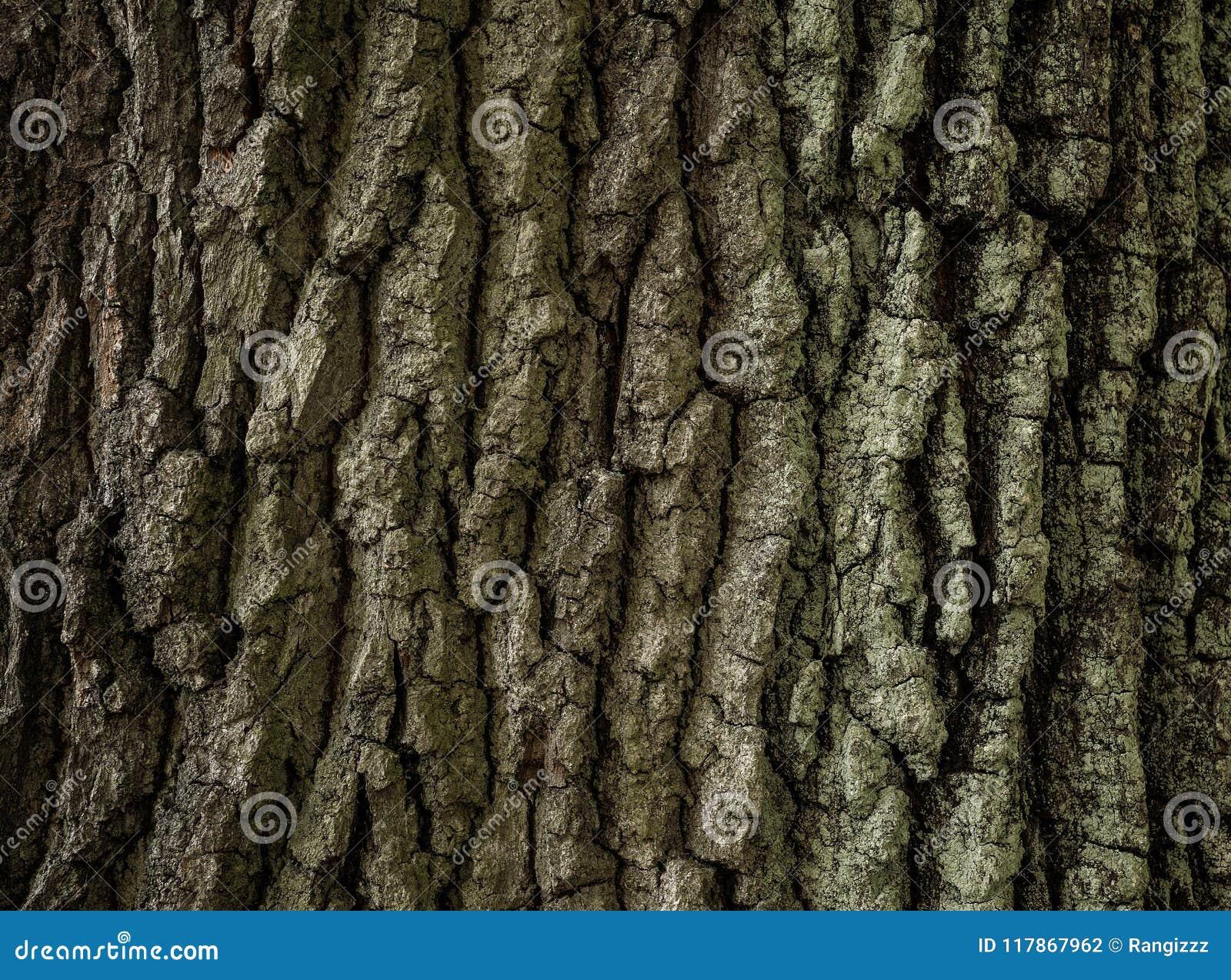 Struttura della corteccia di albero