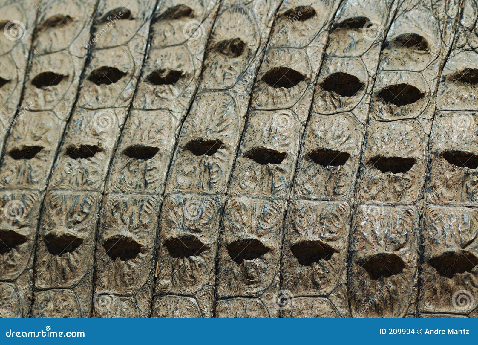 Struttura della pelle del coccodrillo