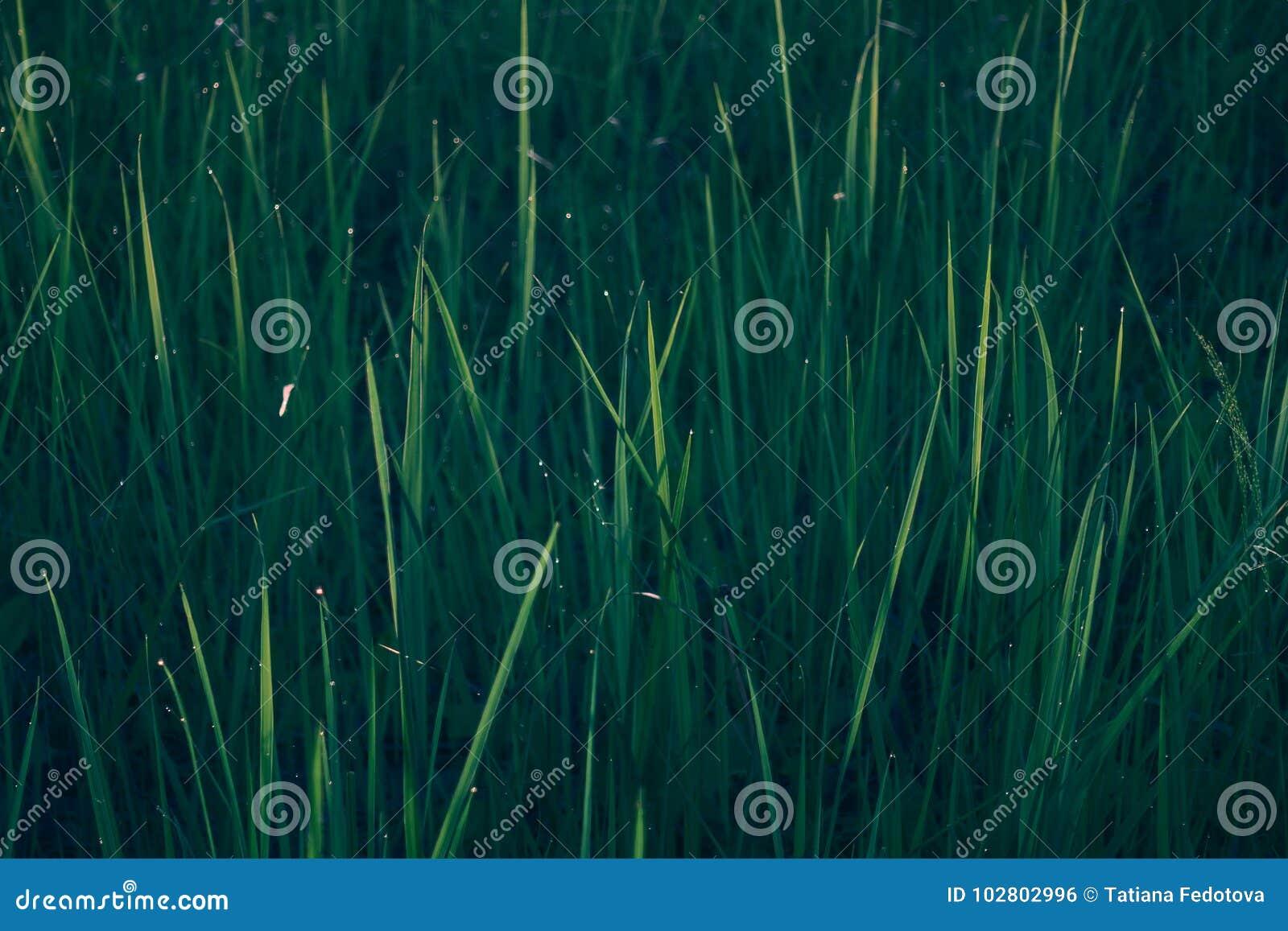 Struttura Dello Sfondo Naturale Dellerba Verde Fotografia Stock