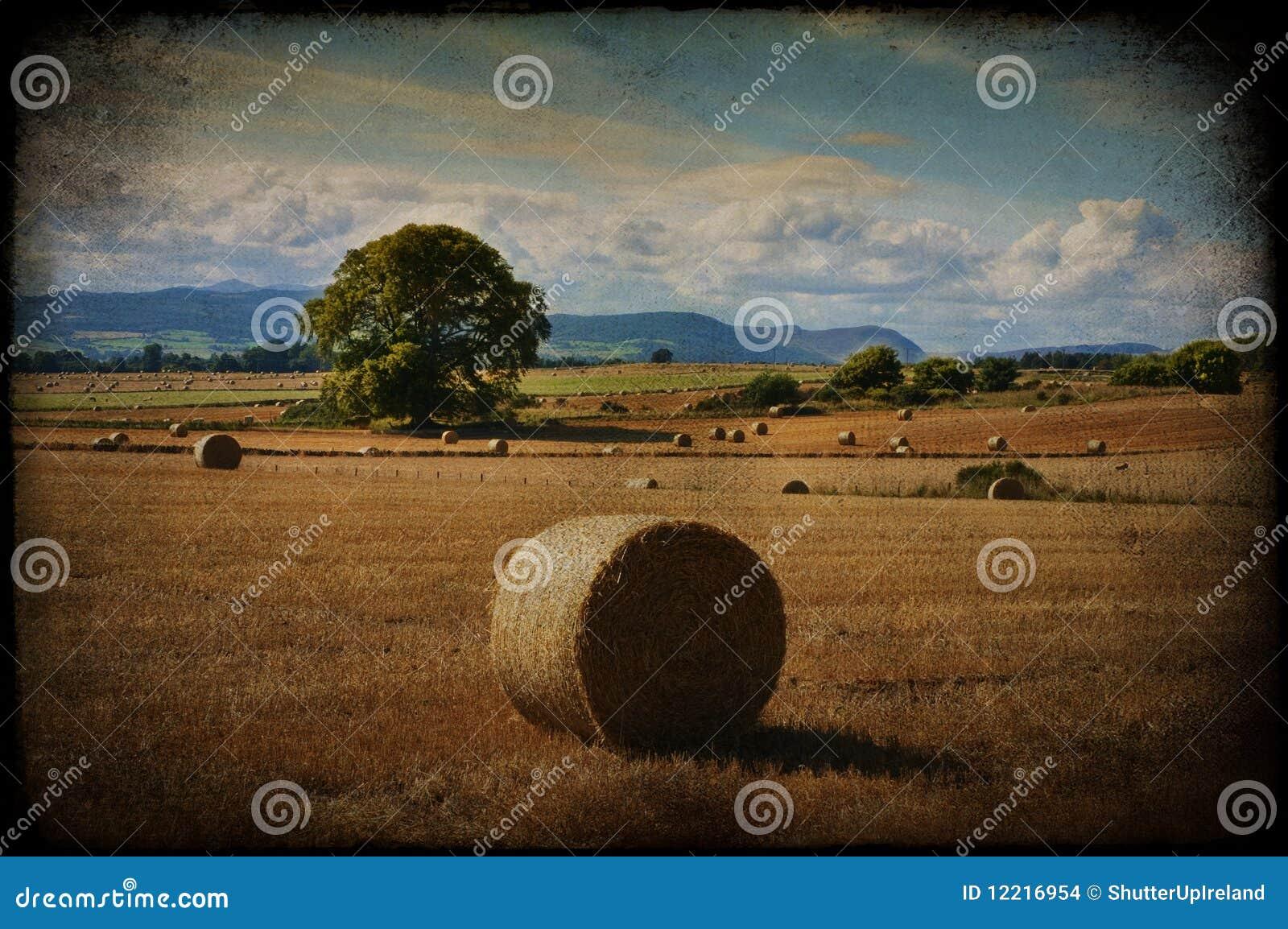 Struttura del grunge della foto di un paesaggio rurale della natura
