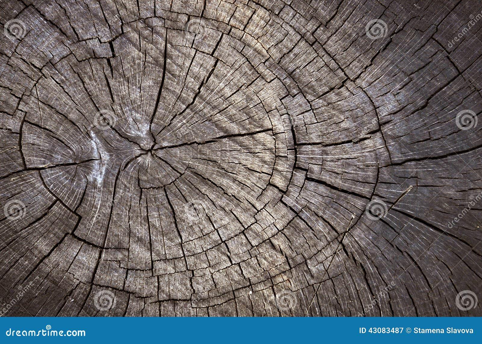 Struttura di legno del taglio