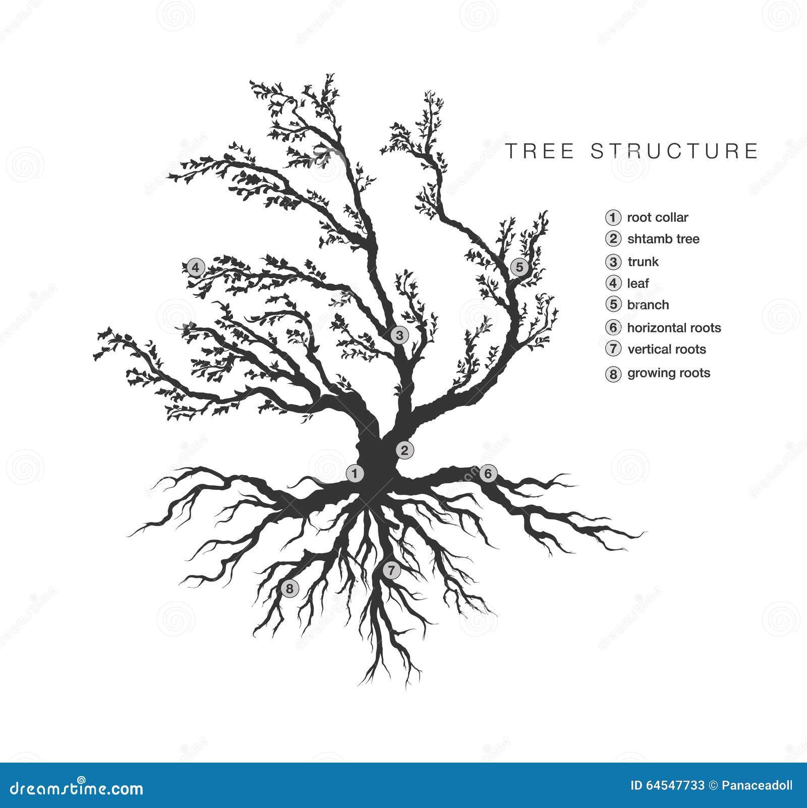 descrizione albero