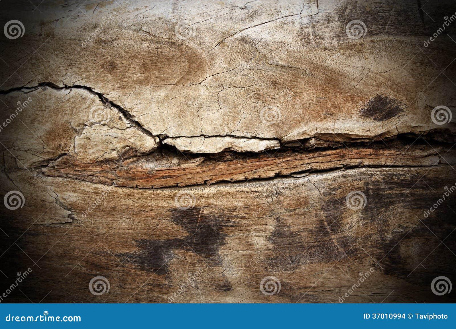 Struttura incrinata di legno del pioppo