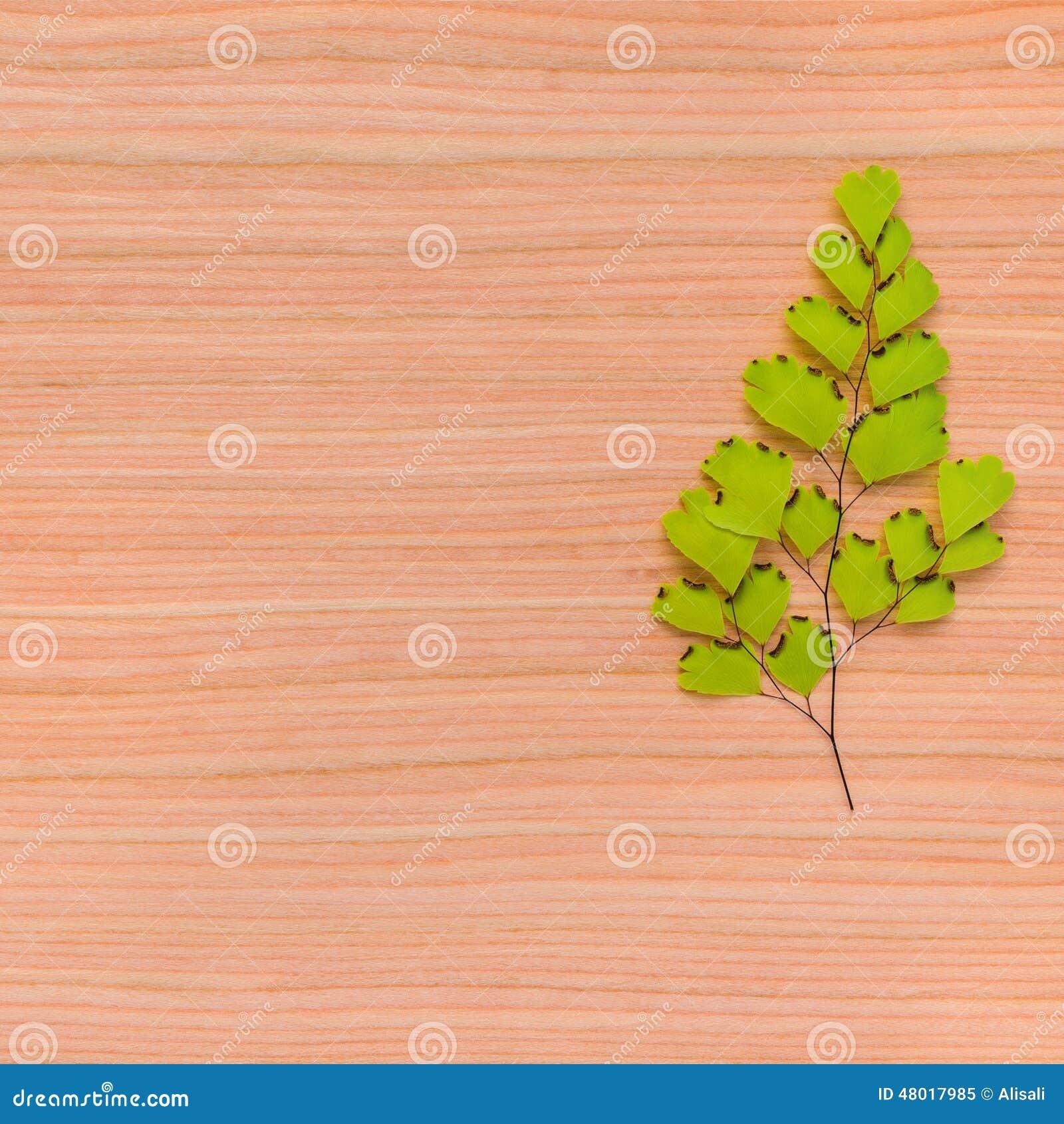 Struttura naturale del fondo dell albero con il ramo incorniciato