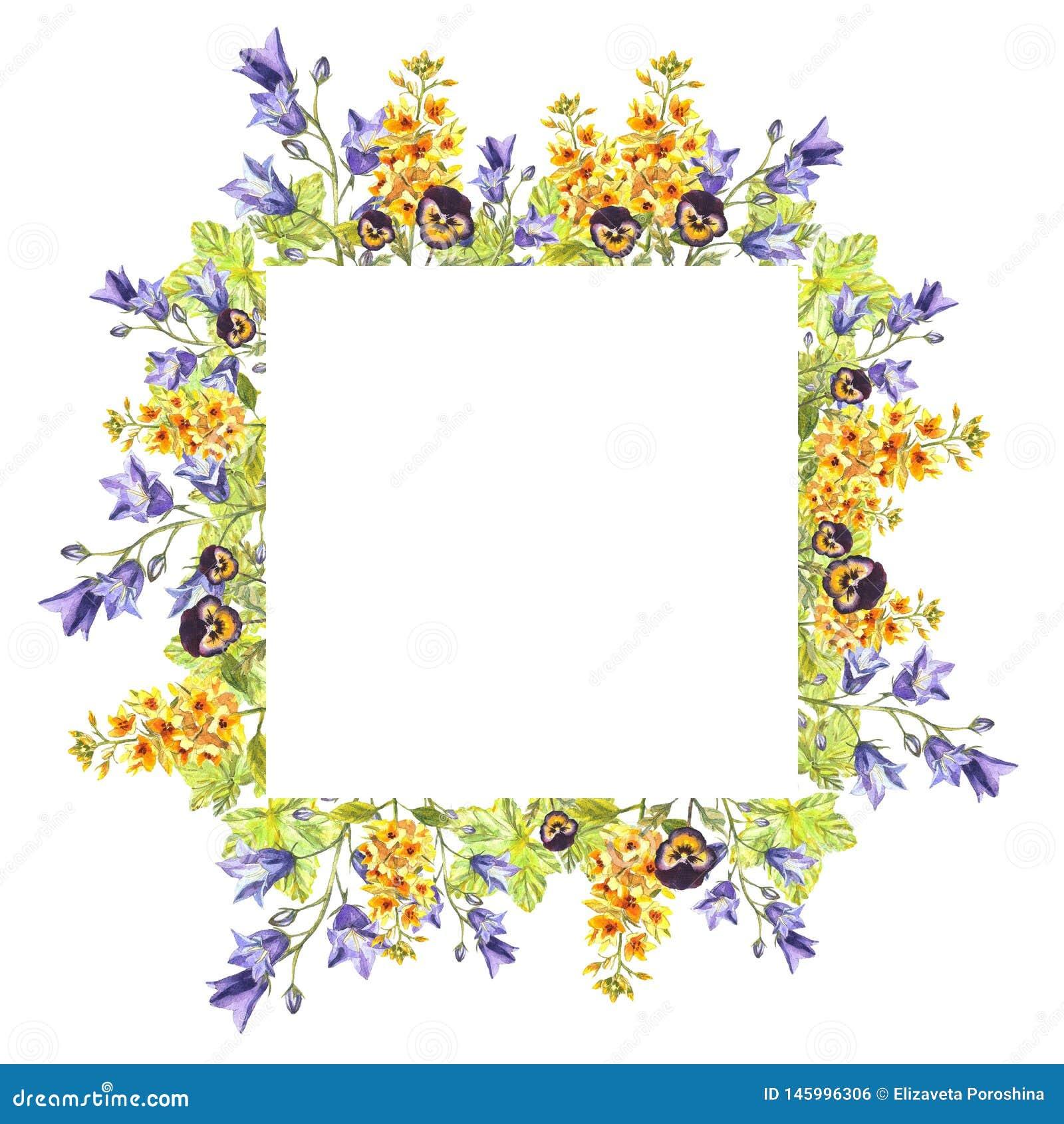 Struttura quadrata acquerella del eremurus, campanule, foglie, viole porpora