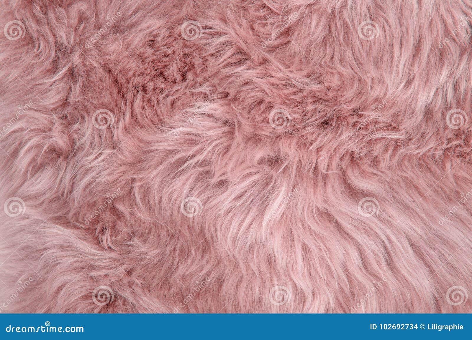 Coperta Lana Di Pecora.Struttura Rosa Della Lana Della Pelliccia Delle Pecore Del