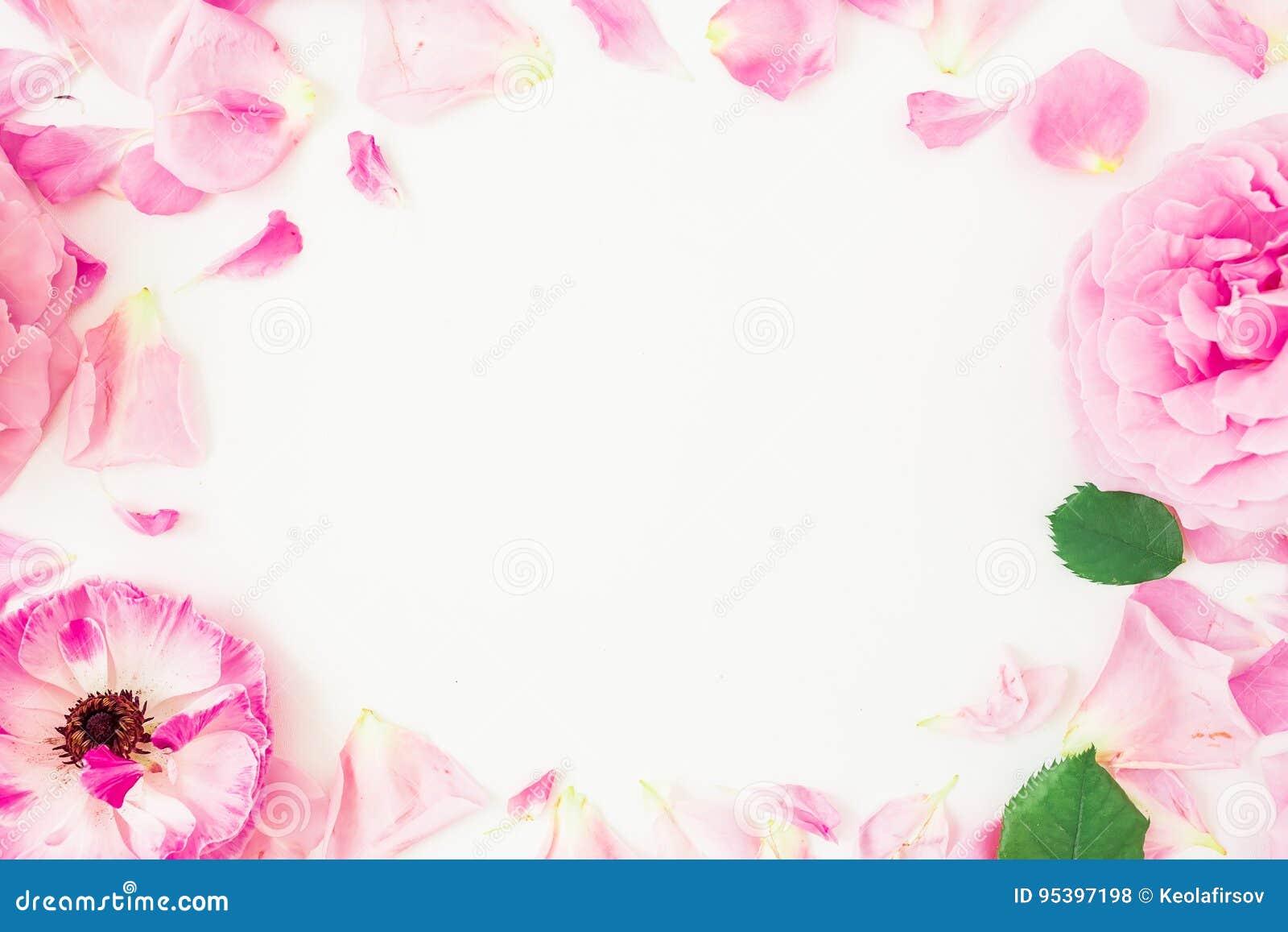 Struttura rotonda dei fiori, dei petali e delle foglie rosa su fondo bianco Composizione floreale in stile di vita Disposizione p