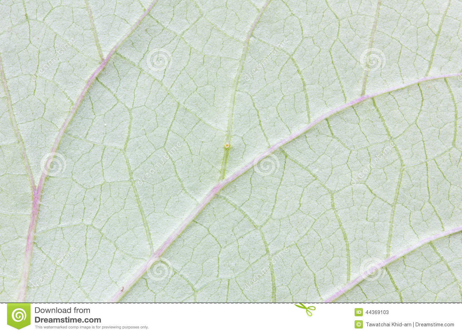 Struttura verde astratta della foglia per fondo