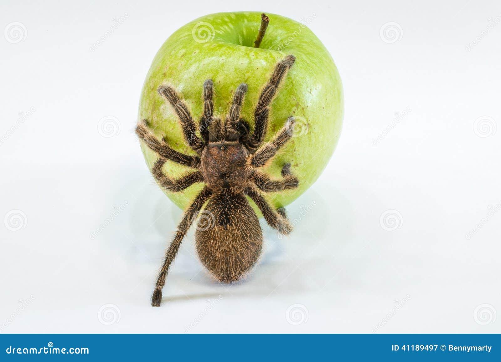 Struty jabłko,