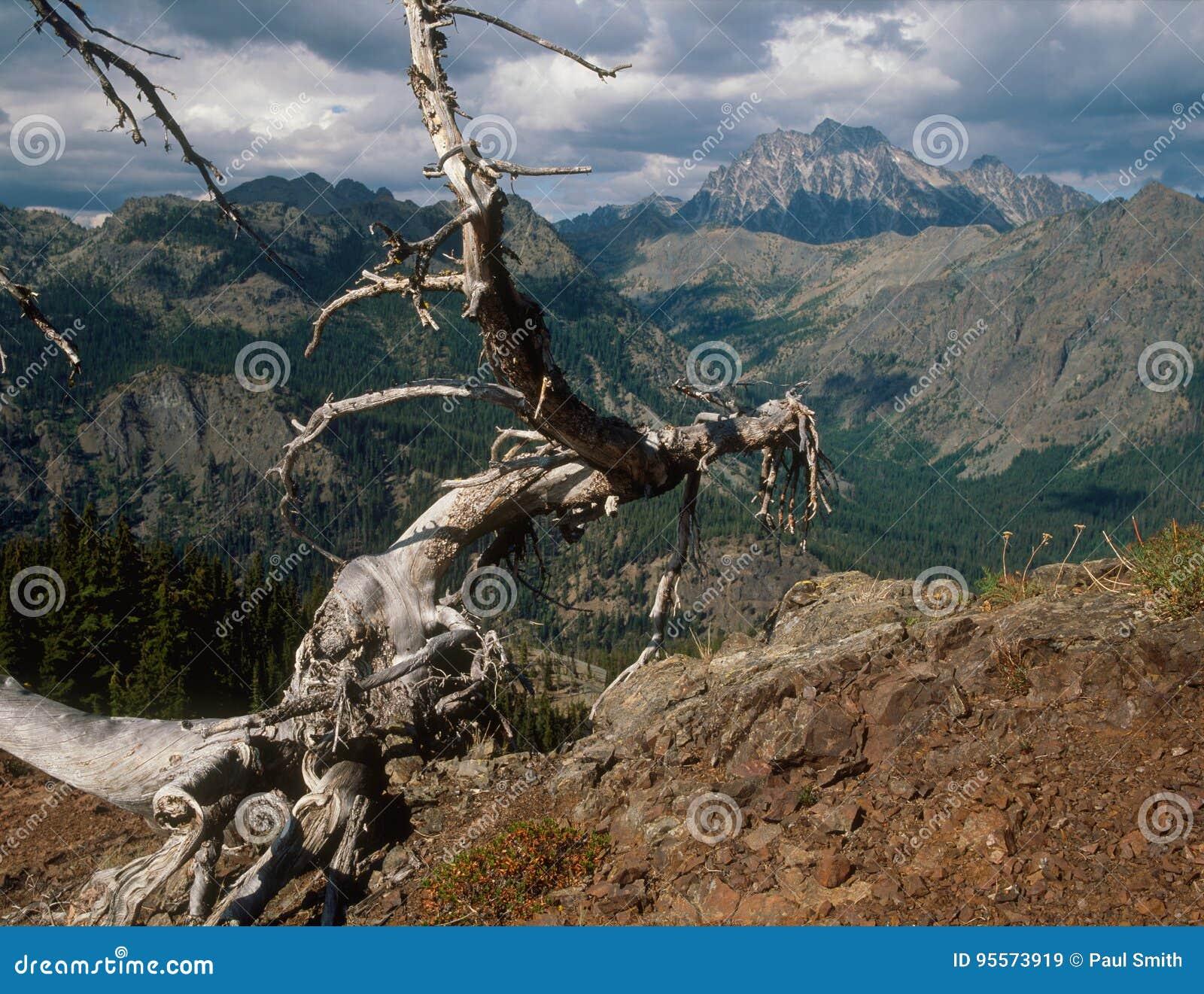 Stuart Range dalla montagna di Koppen, regione alpina dei laghi, gamma della cascata, Washington