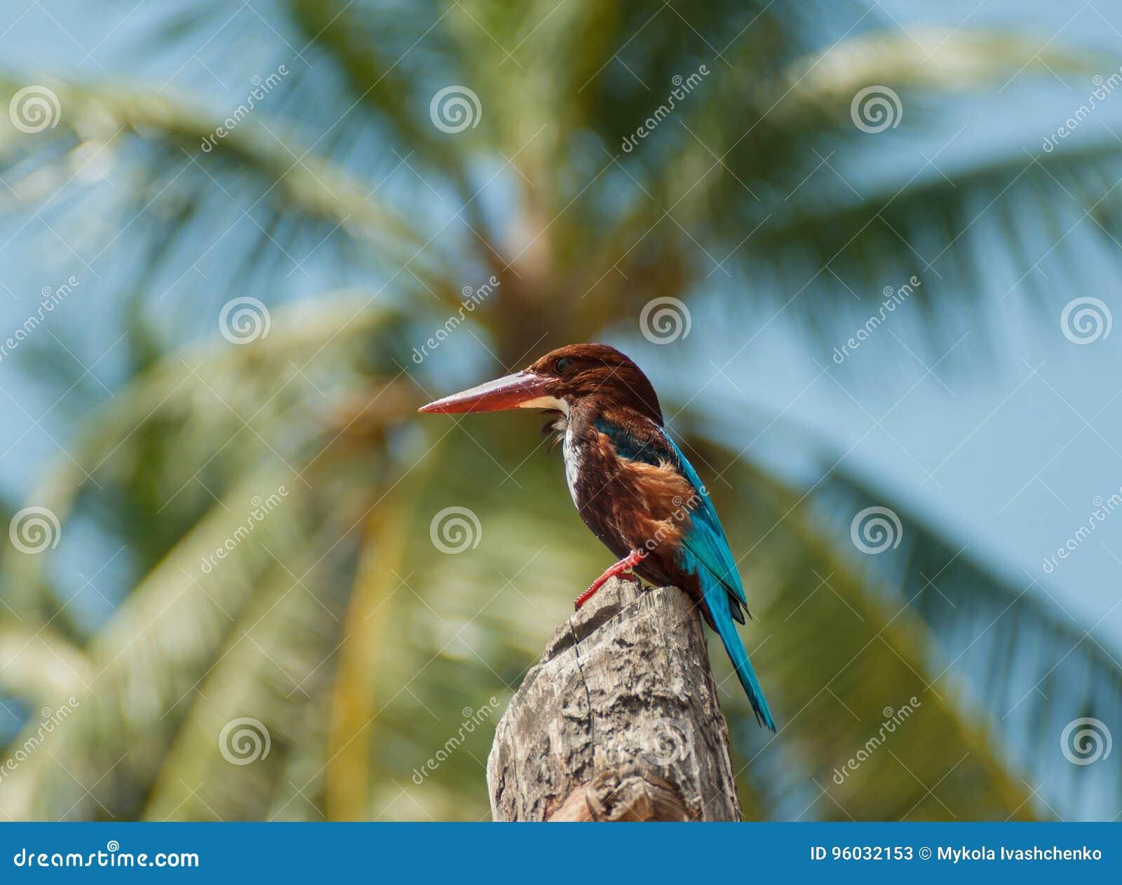 Stubarwny tropikalny ptak