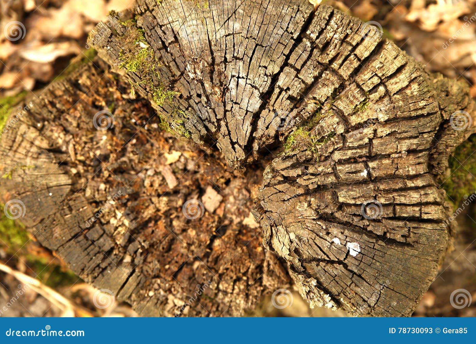 Stubbe för texturtimmerträd