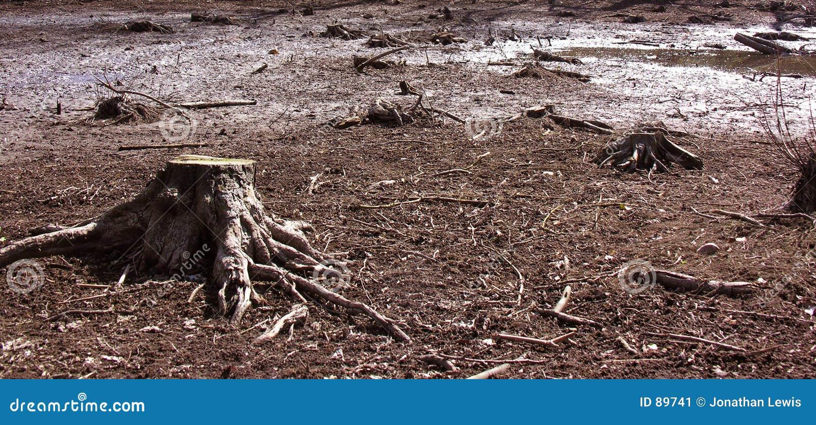 Stubbeswamptree