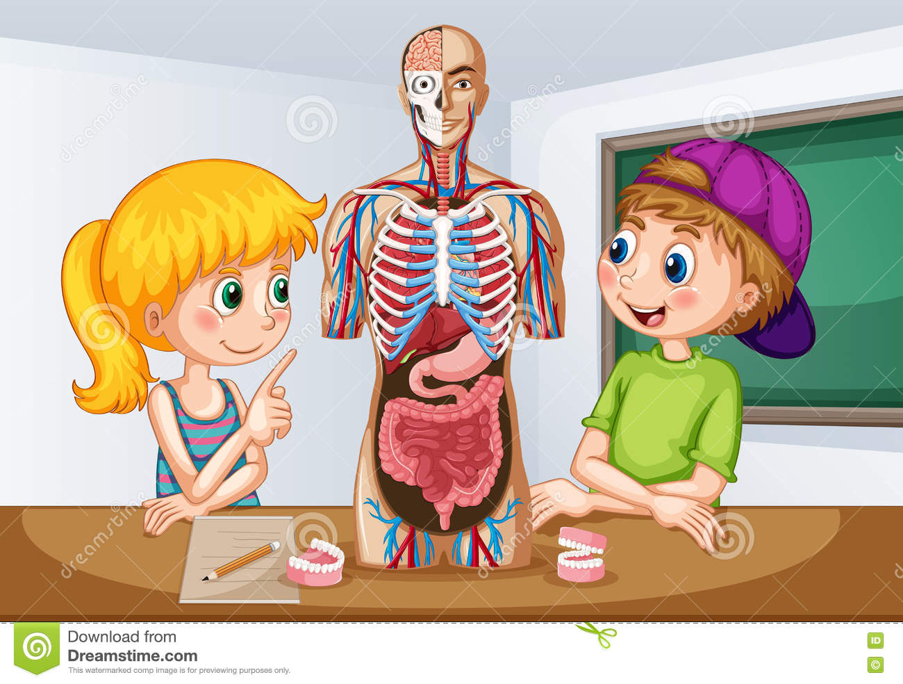 Students Learning About Human Anatomy Stock Vector Illustration Of