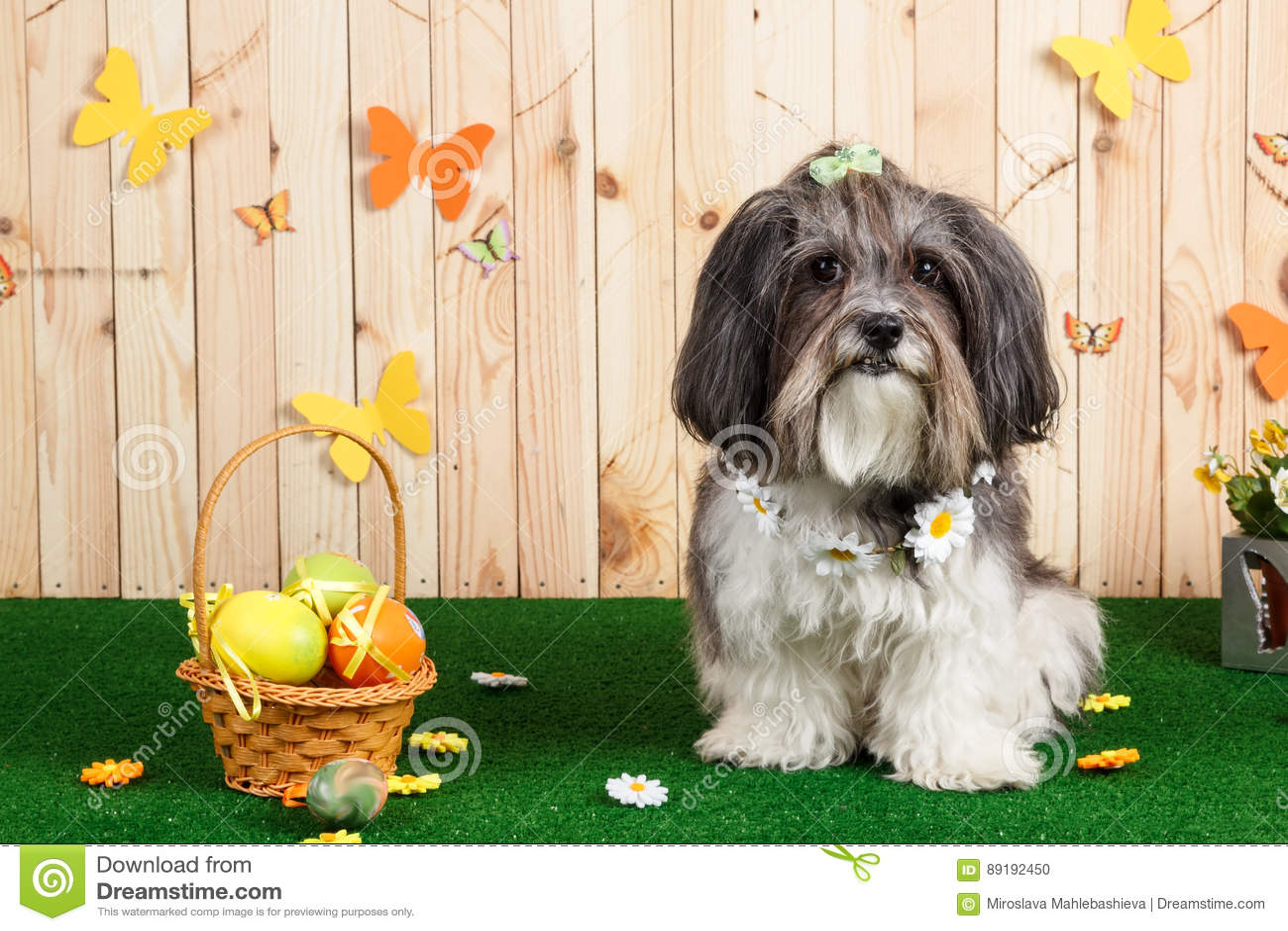 Studio shot of a cute dog in vibrant Spring Easter scene