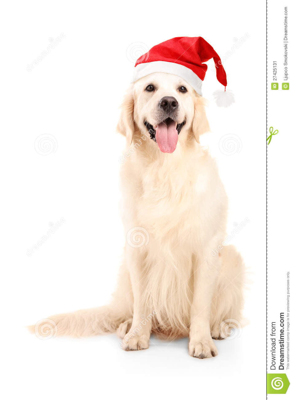 Christmas Hats For Dogs.A Studio Shot Of A Dog Wearing A Christmas Hat Stock Image