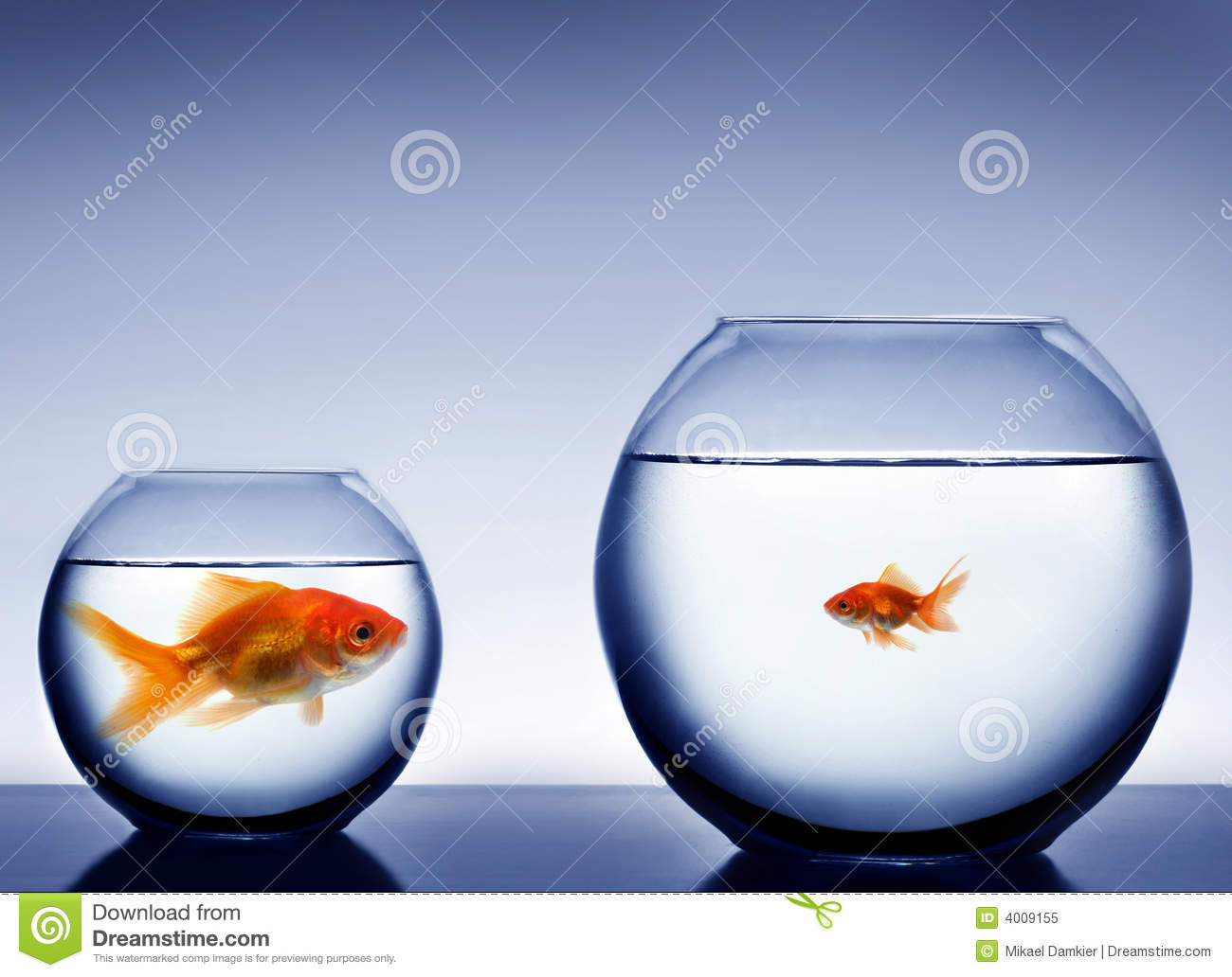 Studio shot of a fish in bowl royalty free stock photo for How to make a fish bowl