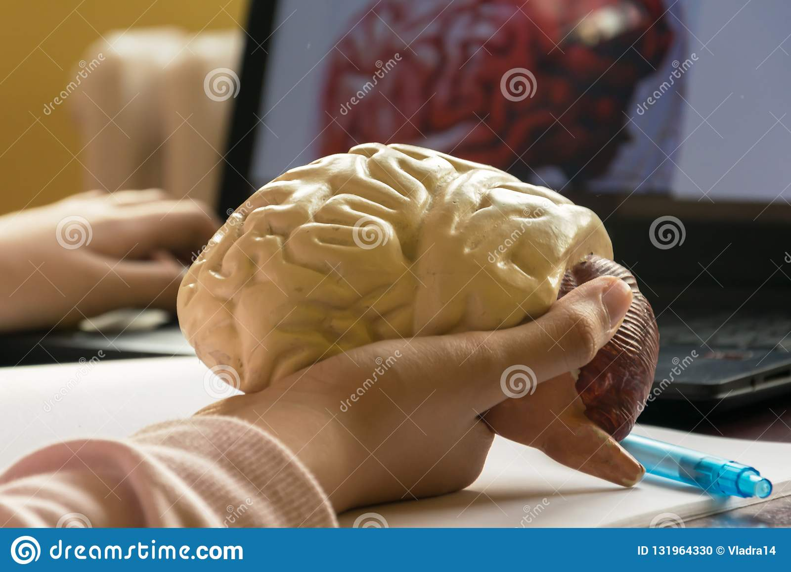Study Of Human Brain From 3d Model Stock Photo - Image of