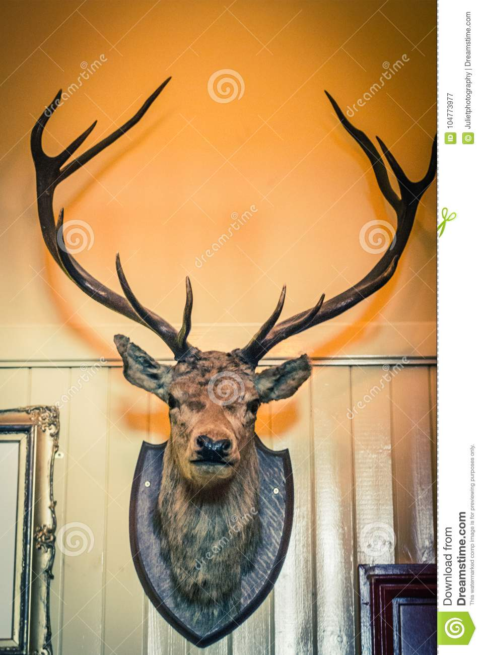 Amazing Deer Skull Wall Decor Images - Wall Decoration Ideas ...