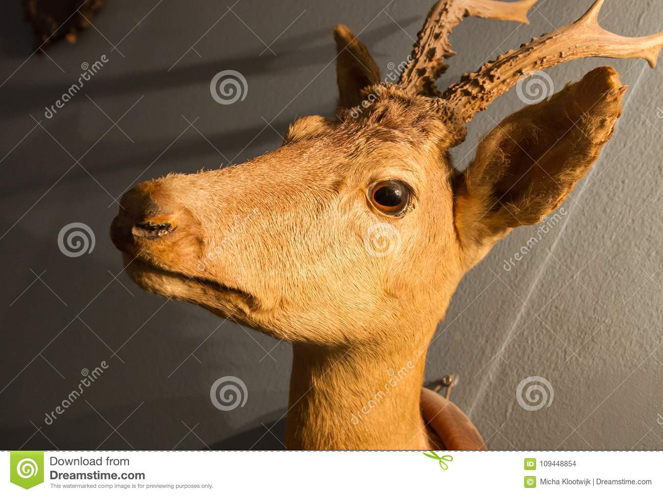 Stuffed deer head stock photo. Image of anatomy, deer - 109448854