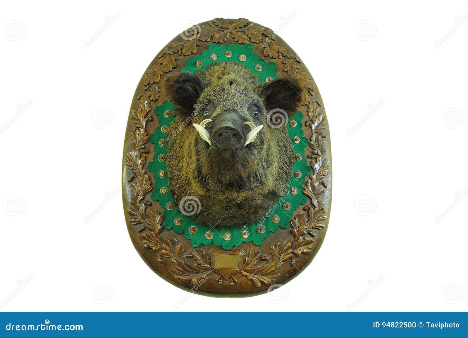 Stuffed head of hunted wild boar