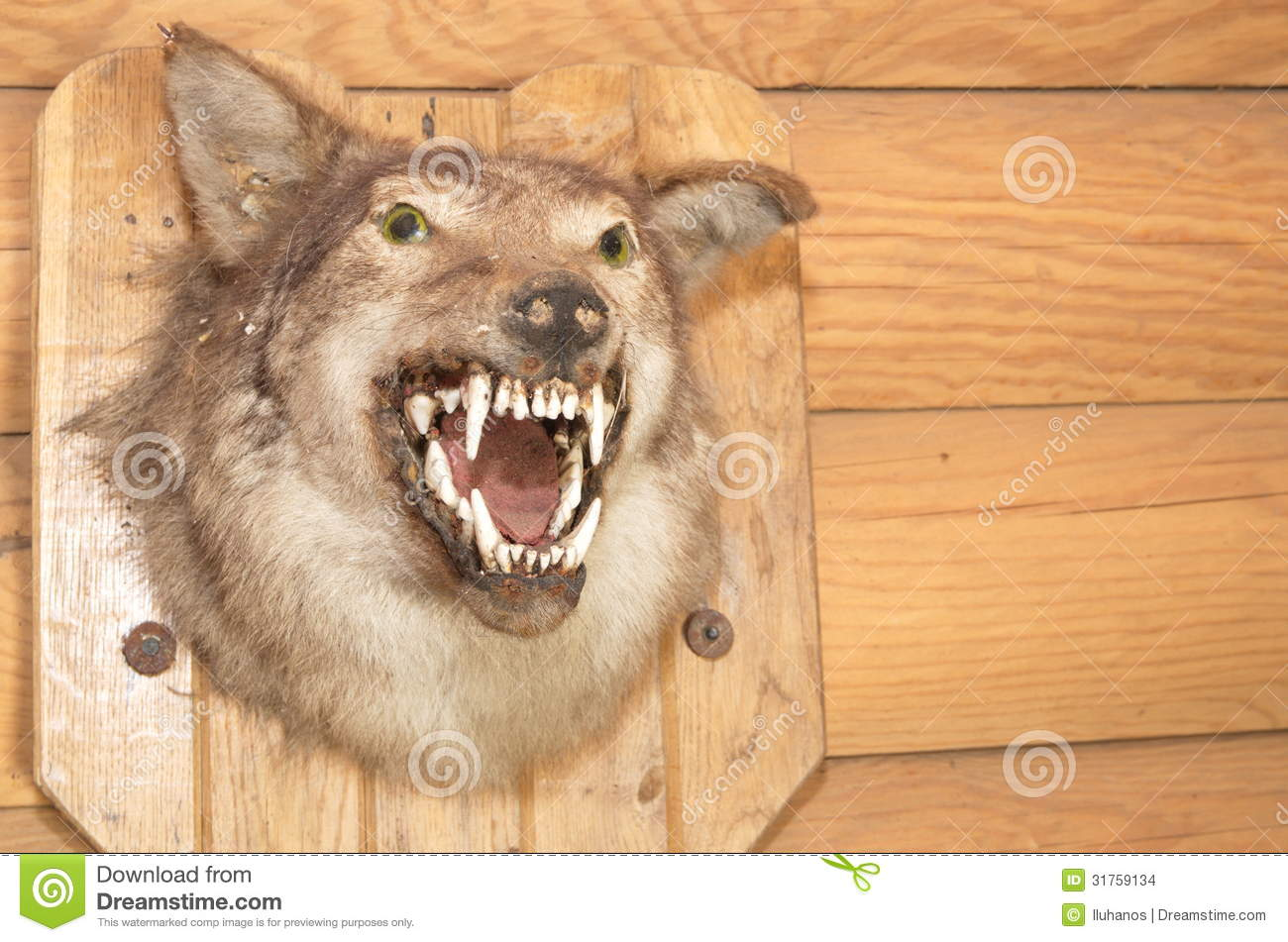 Wolf Snarling Face