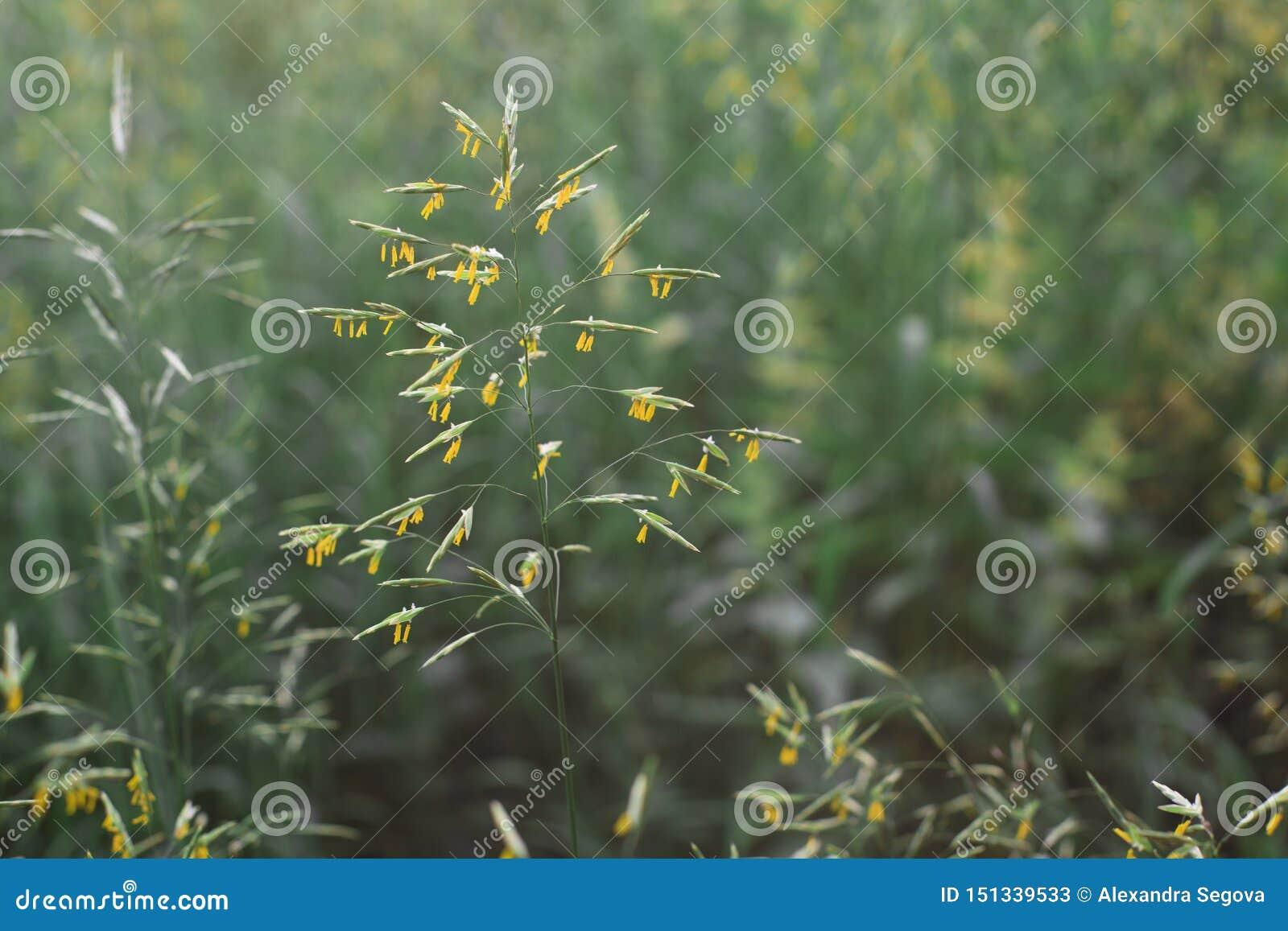 Stuifmeel op het gras