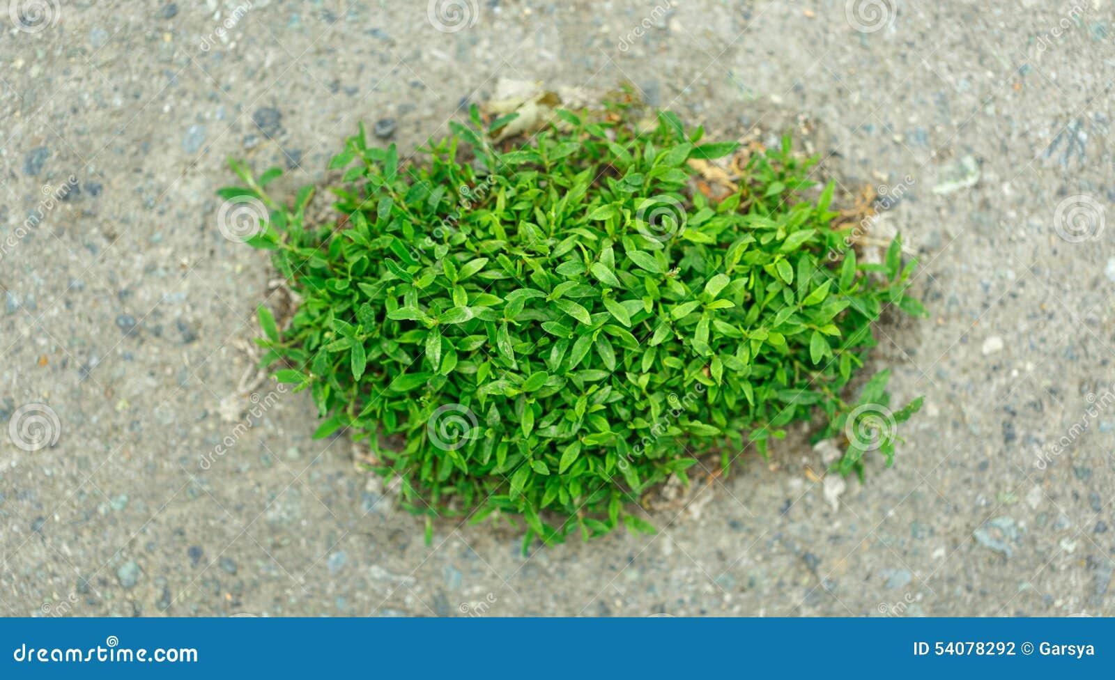 Stuk van gras ter plaatse