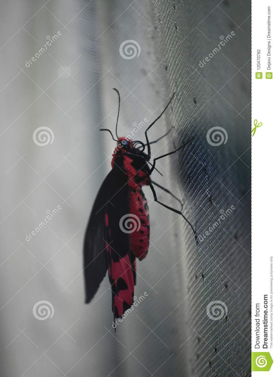 Beautiful swallowtail butterfly resting on a screen