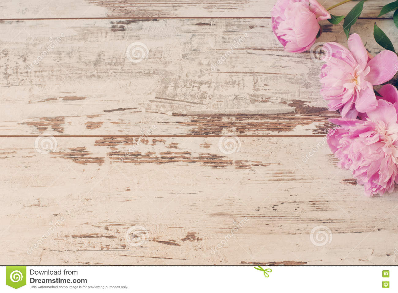 Stunning Pink Peonies On White Light Rustic Wooden Background