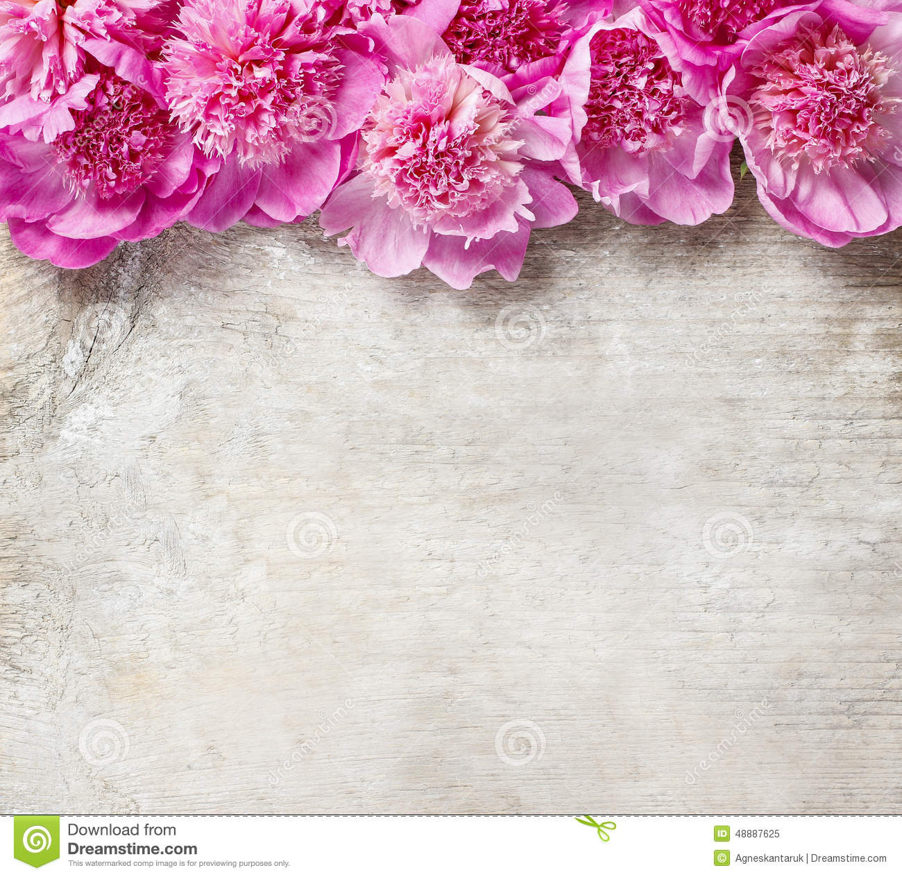 Stunning Pink Peonies On White Rustic Wooden Background Stock