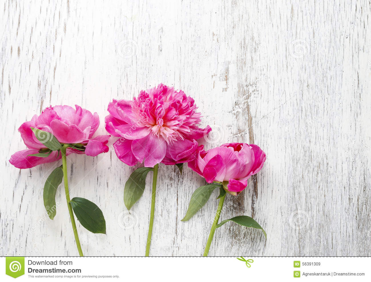 The Pink Peonies stunning pink peonies on rustic wooden background stock photo