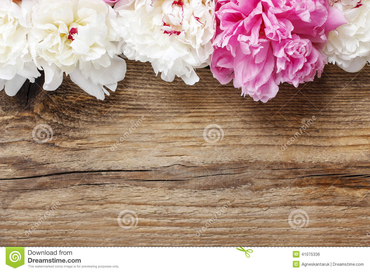 Stunning Pink Peonies On White Light Rustic Wooden