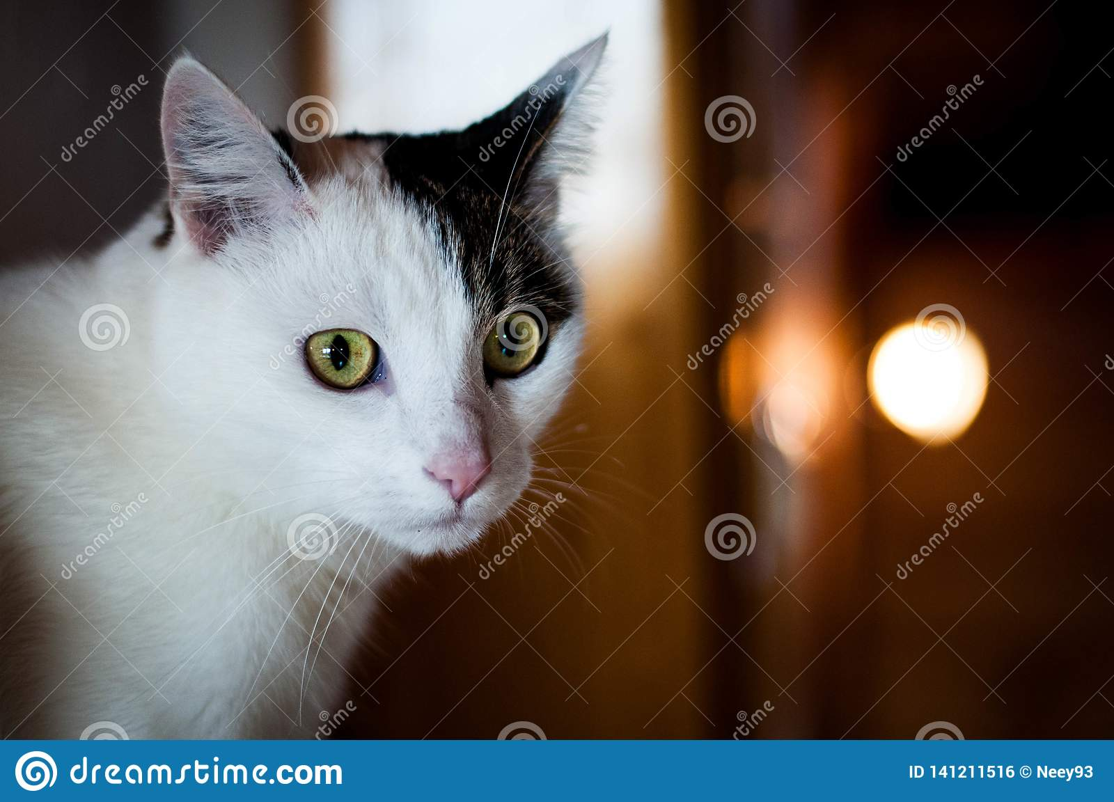 Cute white cat with black spot starring looking into the camera