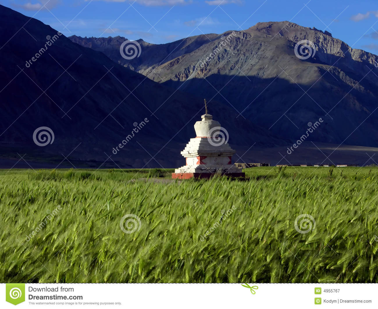 Stupa in barley field