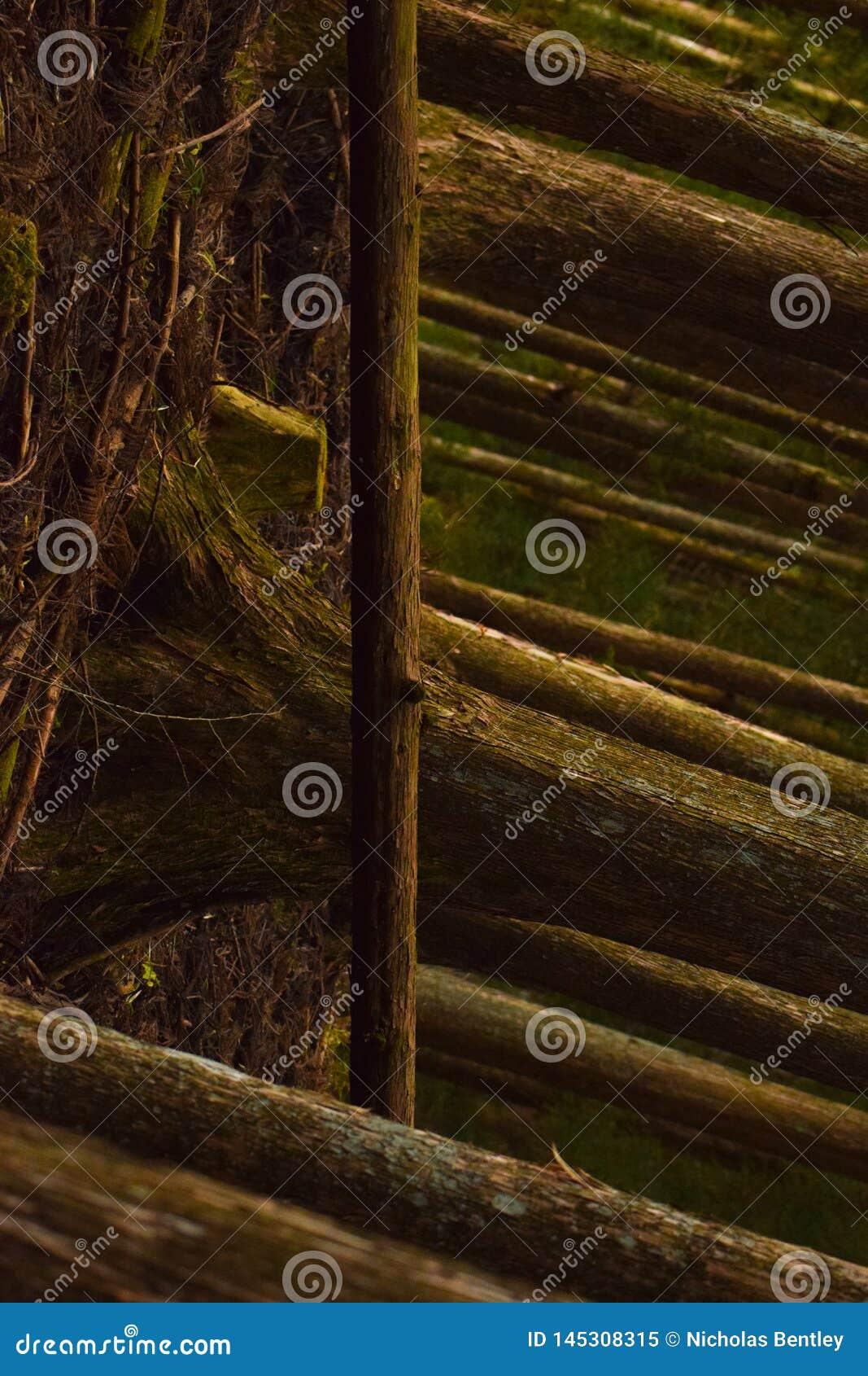 Stupad trädperspektivlutande