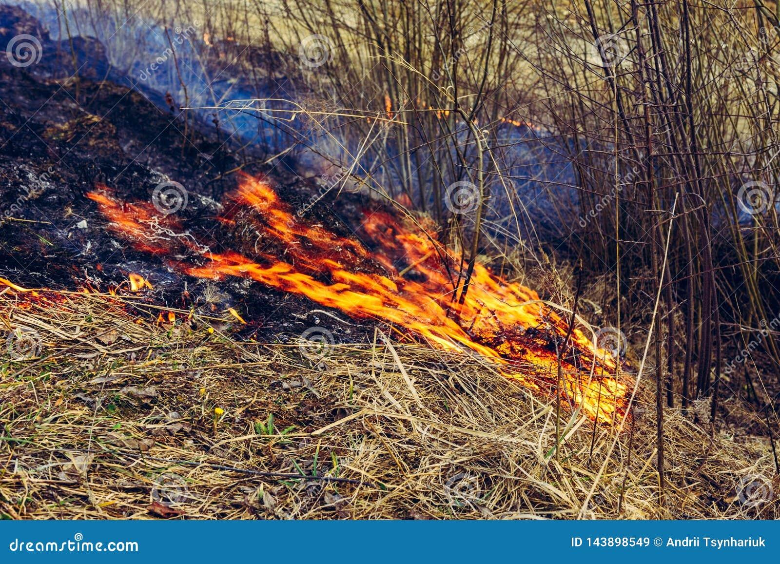 Stupat torrt gräs är farligt till liven av små djur och kryp såväl som skada till mänsklig hälsa